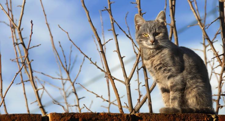60ea86a9659e Katter har konsentrert urin noe som øker risikoen for urinveisproblemer.  Det er viktig å passe på at katten får i seg tilstrekkelig med vann.