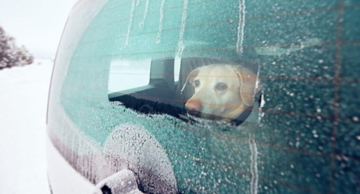 Hund i kald bil