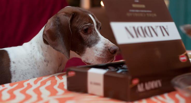 Bilderesultat for hunden i julen